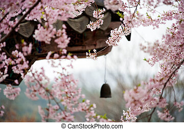 And the kind of beautiful plum blossoms