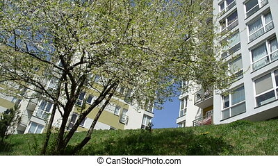 blossom tree flat house - tree blooms petal move and fall...