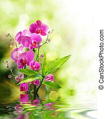 hermoso, orquídea, bambú