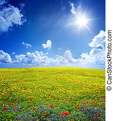 yellow field in serene scene - yellow field in serene scene...