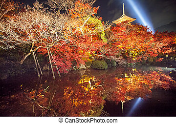 Night view of the fall season for adv or others purpose use