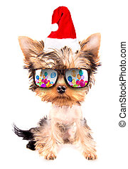 christmas dog as santa with party glasses on a white...