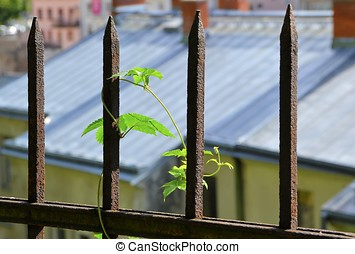 a plant in a rusted fence