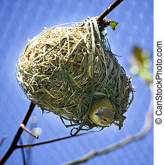 Bird in Nest Looking Down - Bird In Nest Looking Down