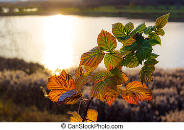 Transparent colorful leaves