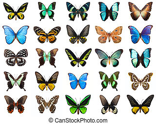 Tropical butterflies - Collection of beautiful tropical...