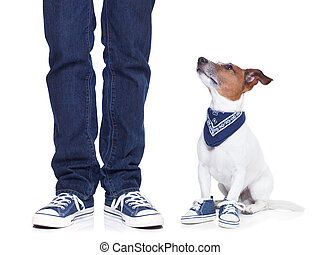 dog owner and dog - dog owner with dog both wearing sneakers...