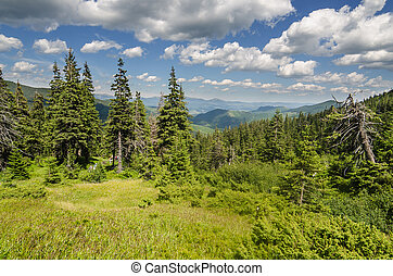 Carpathian Mountains in Ukraine in the summer