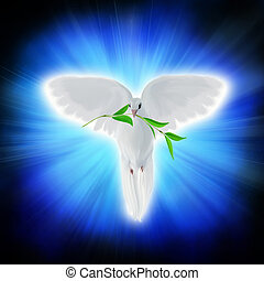 White dove of peace