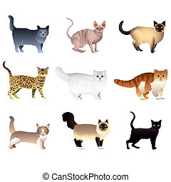 Cats isolated on white vector set - Popular purebred cats...