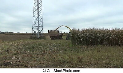 corn field harvesting - seasonal agricultural corn field...