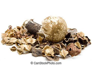 Mushroom with potpourri on white background