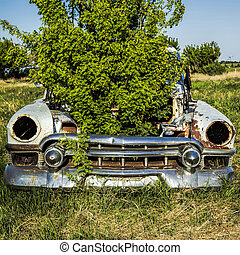Old Car with Plant in the Hood - A caragana tree is growing...
