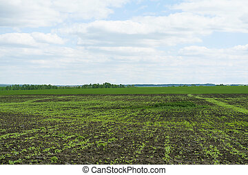 landscape meadows