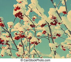 red ash-berry under snow - vintage retro style
