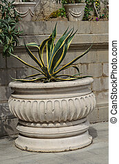 Agave - Ancient pot with a large agave