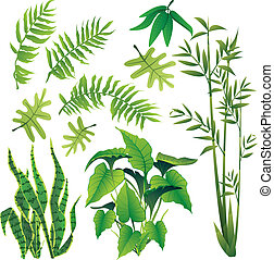plants - exotic plant leaves design element vector...