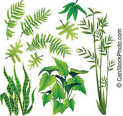 plants - exotic plant leaves design element vector...