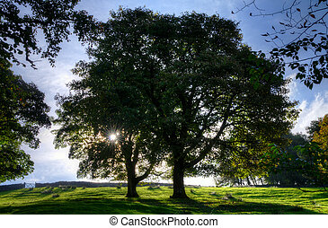 Backlit trees in a meadow - View of two backlit trees in a...