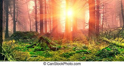Misty forest. - Alpine vegetation distorted severe...