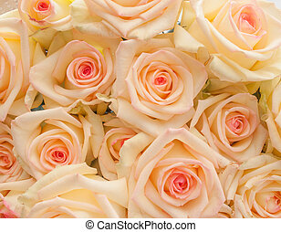 Ivory with pink center roses