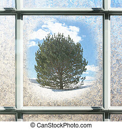 Frosted Square Winter Window Glass with Pine Tree Outside -...