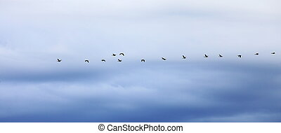 geese flying in formation against an evening sky