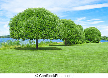 Spacious green lawn with beautiful trees on a lakeshore.