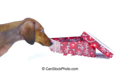 HD - Dog and Christmas gift_scene02 - HD - Dog and Christmas...