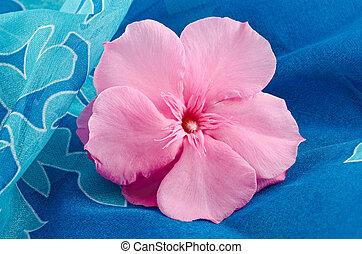 oleander flower on blue background