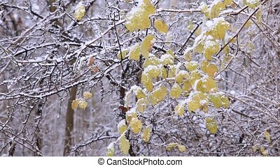 Winter forest - Snow in the winter forest