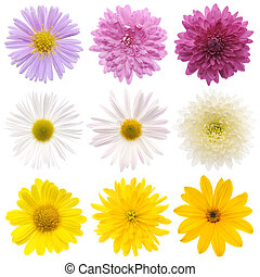 collection of flowers isolated on a white background.