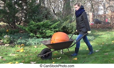 woman pumpkin wheelbarrow - gardener woman carry huge ripe...