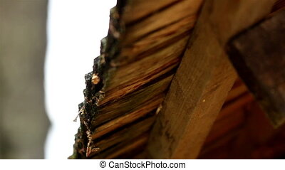 Dirt and moss are found in the wooden roof shingles that...