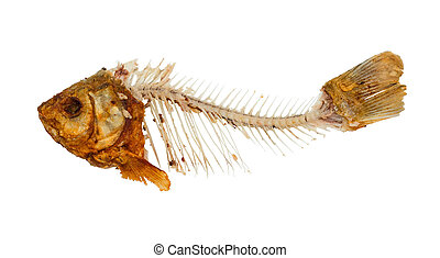 Skeleton of fish - symbol for food shortage and misery...