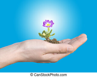 spring time - flower in hand on blu sky background