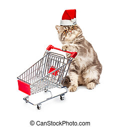 Cat in a Christmas cap with a cart on white