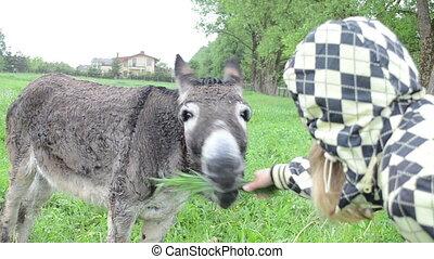 woman donkey feed grass