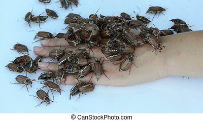 bugs banch - woman palm lying still on the white surface big...