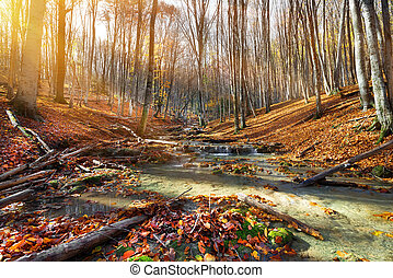 Wild mountain river in the autumn forest