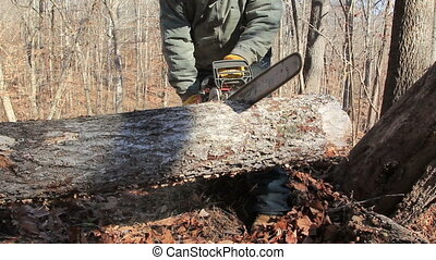 Man chainsaws fallen tree trunk - Close up of chainsaw...