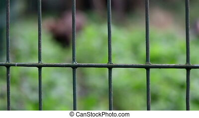 Green steel cage used to cage the big grizzly bear inside...
