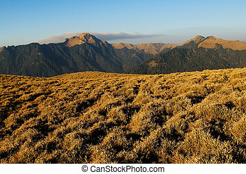 Mountain landscape with golden grassland in the morning