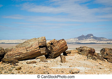 Petrified wood in Patagonia.