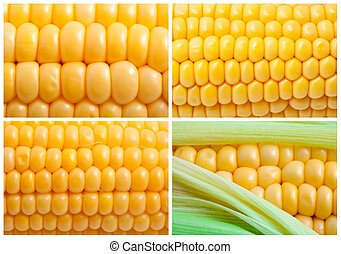 Corn - Fresh yellow corn background