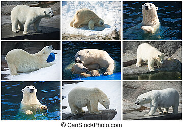 Polar bears - Beautiful photos of cute white polar bears