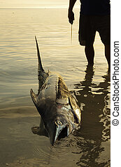 Catch of the day: fisherman with his swordfish - Fisherman...