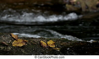 Leaves found on top of rocks that is found at the center of...