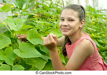 Lovely girl picking cucumber in the greenhouse