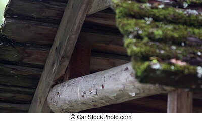 Wooden roof covered in moss